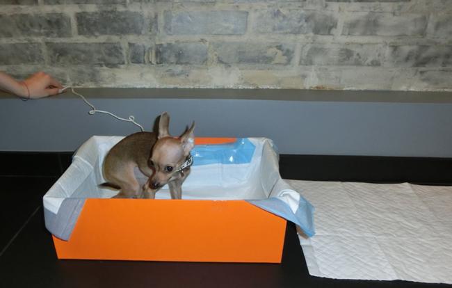 Подробная инструкция как отучить собаку писать и гадить дома 5