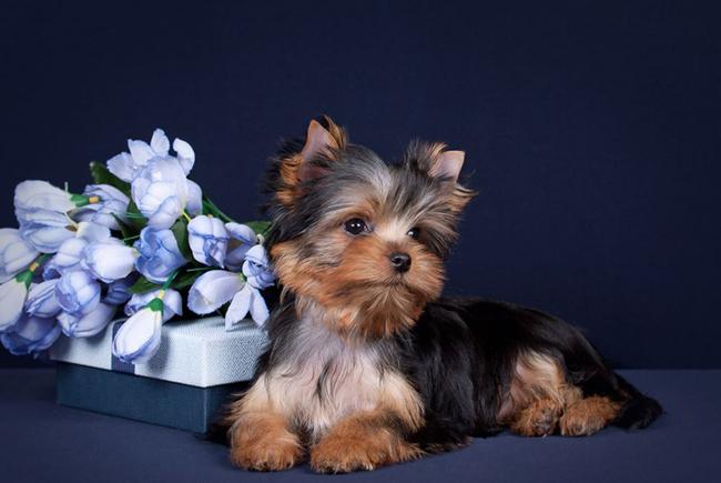 Непревзойденные питомцы: ТОП-5 пород собак, которые не имеют запаха