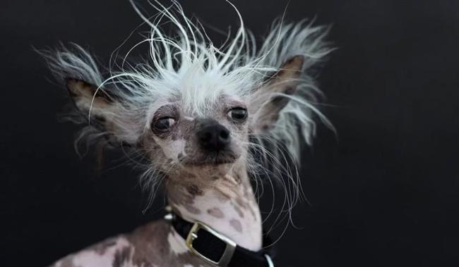 Самая страшная собака: топ-10 уродливых собак в мире
