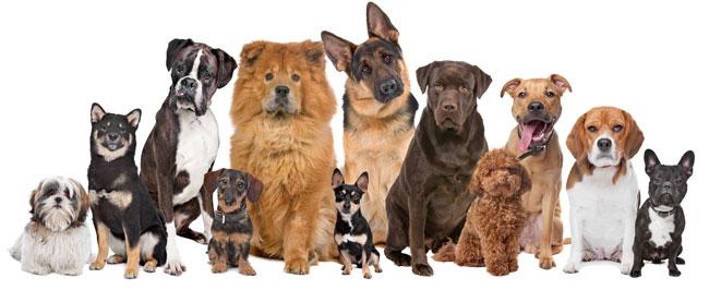 маленькие недорогие породы собак