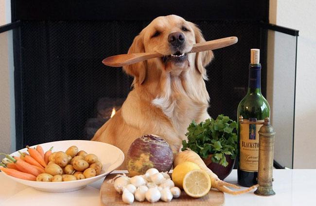 Натуральное кормление для собаки: 5 лучших рецептов