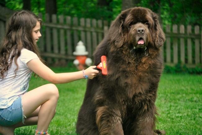 ферминатор для длинношерстных собак