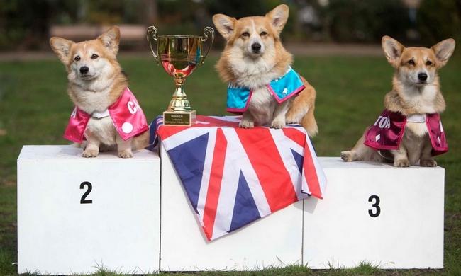 кличка для английской собаки