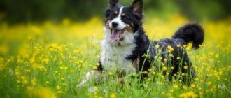 клички для английских собак