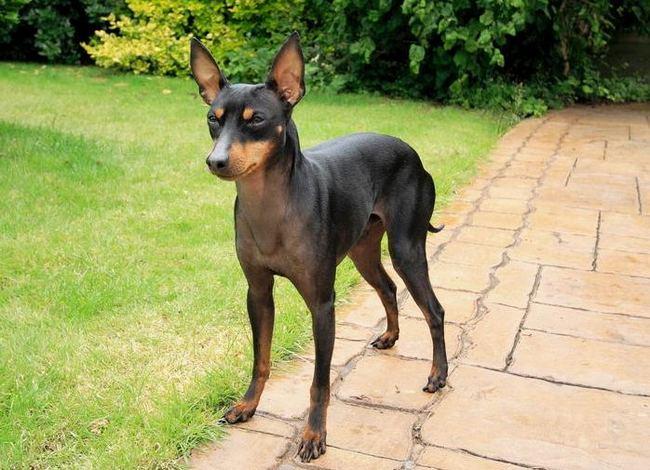 клички для английских пород собак