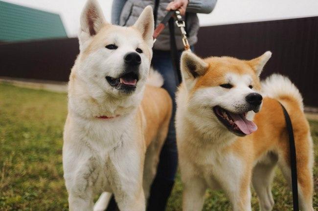 клички для японских собак