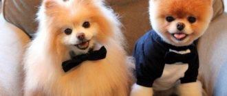 клички для китайских собак