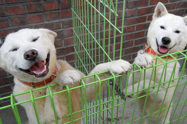 клички для корейских собак