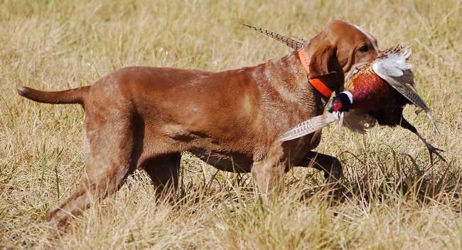 кличка для охотничьей собаки
