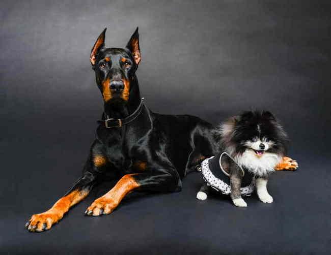 определить породу собаки по фотографии