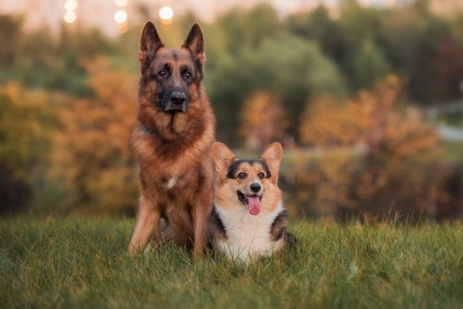 как узнать собаку