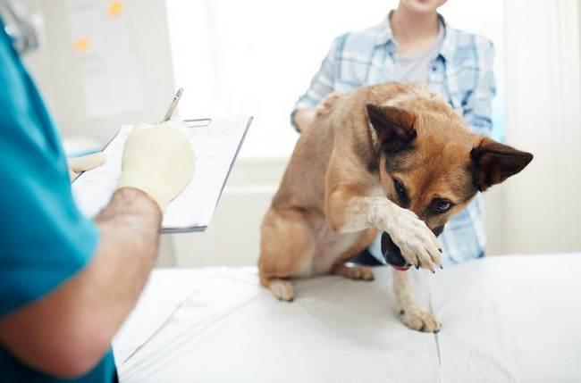 стерилизация собак эндоскопия